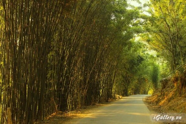Phong Cảnh 3913