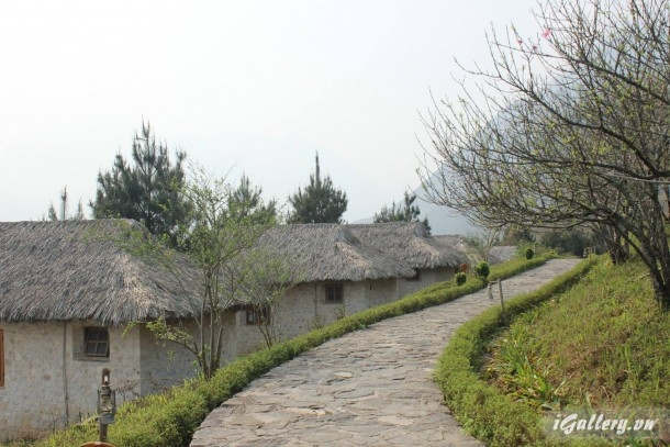 Phong Cảnh 3803